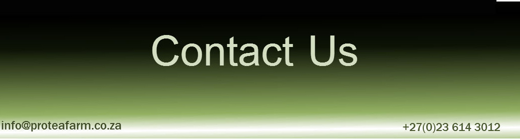 Contact-Us-13-1038x280