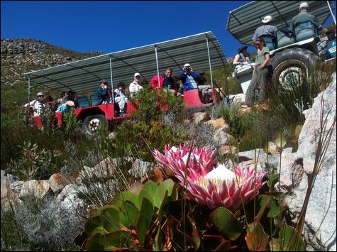 Trekker met Proteas